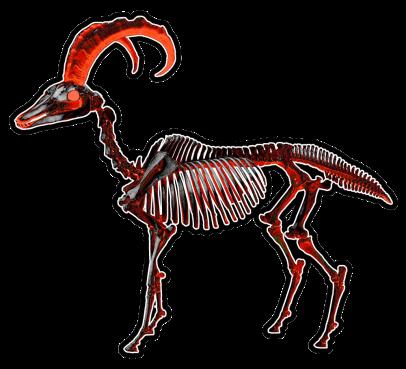 dolphin_horse_skeleton_by_nasukaran-d678r5p